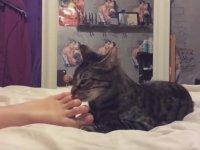 Ayak Fetişisti Kediler