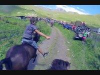 Doğada At Yarışı