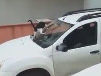 Arabanın Üstüne Sıçan Kedi ve Dayının Tepkisi