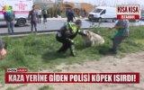 Kaza Yerine Giden Polisi Köpek Isırması
