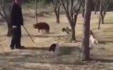 Kedi Çetesinin Saldırısına Uğrayan Köpek ve Sahibi