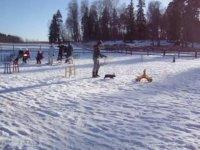Kaninhoppning İsveç Tavşan Zıplatma Yarışı