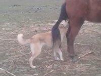 Köpeğin Acımasızca Tekmelenmesi