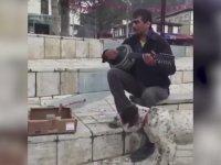 Sokak Sanatçısının Parasına Göz Koyan Şapşik Köpek