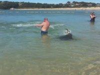 Plajda İnsanların İçinde Avlanan Fok