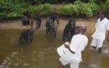 Göl Kenarındaki Maymunları Besleyen İnsanlar