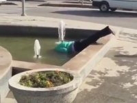 Süs Havuzunda Serbest Stil Yüzen Dayı