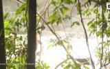 Sulara Kapılan Orangutanı Kurtarmak