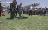 Mezuniyet Törenini Basan Pelikanlar