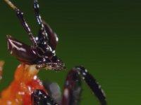 Kung-Fu Peygamber Devesi vs Zıplayan Örümcek - Sürpriz Sonlu