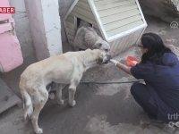 Ölümü Bekleyen Köpekleri Hayata Bağlayan Kadın