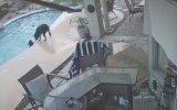 Dostu İçin Havuza Atlayıp Çıkaran Köpek