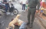 Dostunun Yanına Kimseyi Yanaştırmayan Köpek Gibi Köpek