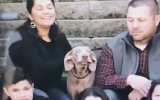 Aile Fotoğraflarını Sürekli Trolleyen Köpek