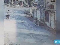 Mahallenin Çetesi Haline Gelen Maymunlar - Hindistan