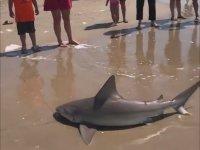 Denizden Köpek Balığı Yakalayan Dayı