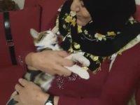 Anne Şefkatiyle Kedi Seven Anadolu Kadınları