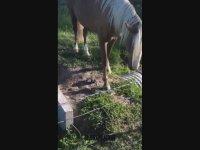 Hüzne Boğan At ve Kuş Karşılaşması (Şoke İçerir)