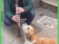 Klarnete Efkarlanan Köpeğin Rakı Almaya Gitmesi