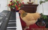 Piyano Çalan Tavuk