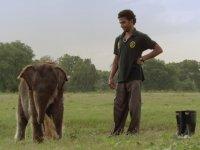 Protez Bacaklı Fil ve İnsanın Dostluğu
