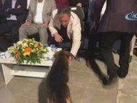 Protokolün Suyunu İçen Köpek