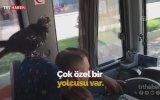 Güvercinle Birlikte Çalışan Halk Otobüsü Şoförü