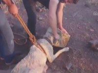 Kuyuya Düşen Köpeğin Kurtarılması