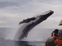 Gezi Teknesine Çok Yakın Atlayan Dev Balina