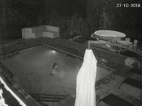 Havuzda Timsah Saldırısına Uğrayan Çift