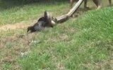 Köpeği Piton Saldırısından Kurtaran Adamlar