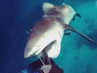 Köpekbalıklarıyla 10 Tehlikeli Karşılaşma