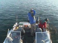 Sen Hiç Bu Kadar Büyük Bir Balık Yakaladın mı?
