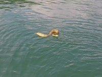 Yılanın Teknedeki Aileye Saldırmaya Çalışması