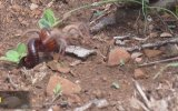 Deve Örümceğinin Kırkayak İle Hızlı Mücadelesi
