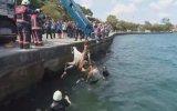 Denize Düşen Atın Kurtarılması  Sarıyer
