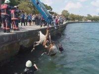 Denize Düşen Atın Kurtarılması - Sarıyer