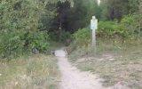 Dağda Gezerken Puma ile Karşılaşmak