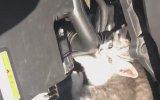 Motor Kaputunda Kedi Eviyle Karşılaşan Sürücü