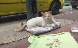 Mama Masrafları İçin Kedi Dilendirmek