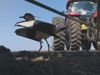 Çiftçinin Yumurtalarını Koruyan Kuşa Karşı Göstermiş Olduğu Hassasiyet
