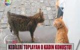 Kedileri Döner Yapıp Suriyelilere Satıyorum