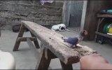 Eğitilen Kuşu Kedinin Kapması