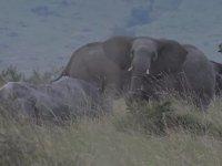 Gergedanların ve Fillerin Arasında Kalan Aslanlar