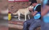 Florence Kasırgasında Çaresiz Bırakılan Evcil Köpek