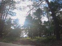 Ormanda Bmw 320D İle Gezmek