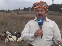 Koyun Yetiştiricisinin Kene Sorununa Çözümü