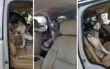 Arabadan İnmeyi Reddeden Köpek