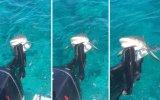 Motor Pervanesini Isıran Köpekbalığı