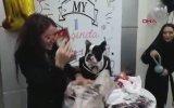 Köpeğe Doğum Günü Partisi Düzenlemek
